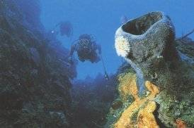 This is an other good spot for diving in Cuba!